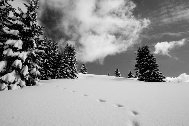les gest-mont chery-sapins-traces-neige