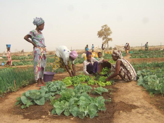 Projet de maraîchage_Sénégal
