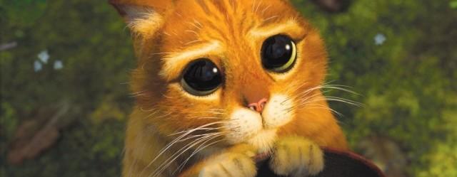 le-chat-potte