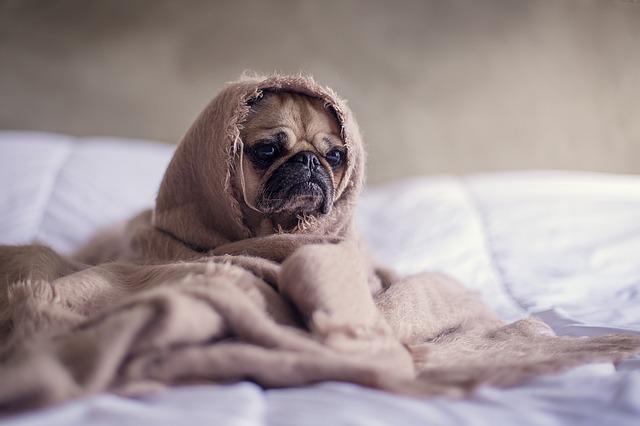 lit-chien-reveil-difficile